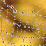 Watery web